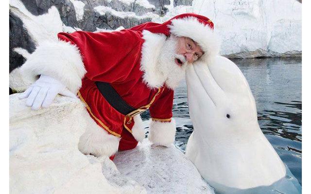 Нашествие Дедов Морозов