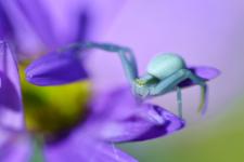 Из фотозала. Макро насекомых