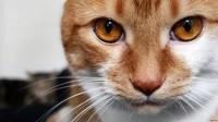 Мое фото Кот рыжий