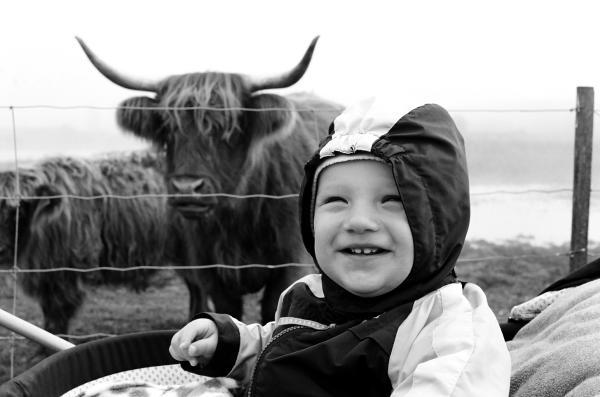 На прогулке с быками. 10 месяцев