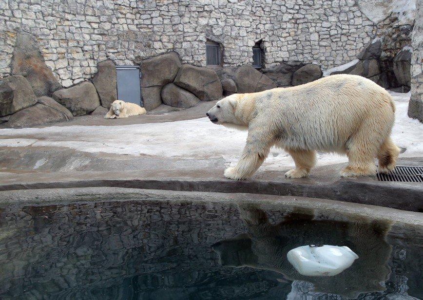 Жизнь животных в Московском зоопарке покажут онлайн