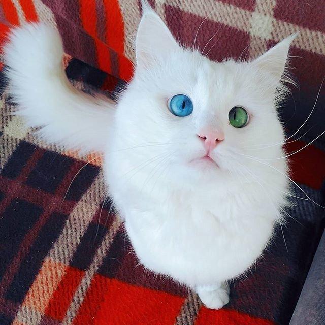 Алош - самый завораживающий кот