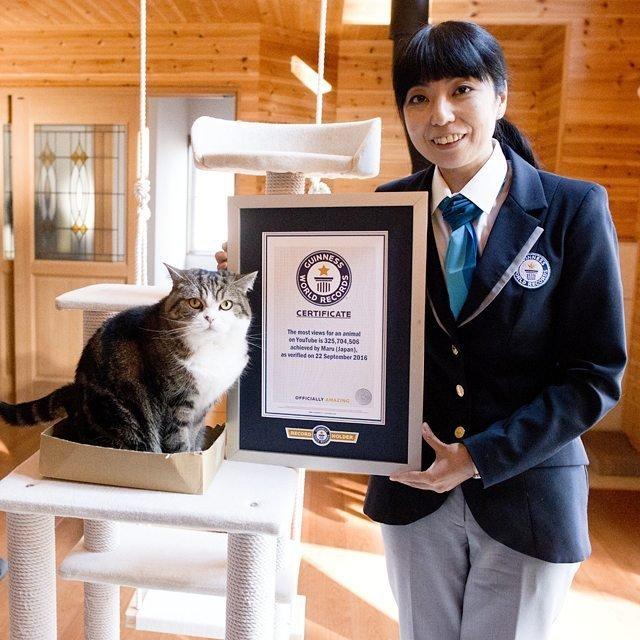 Мару - самый популярный кот Ютуба