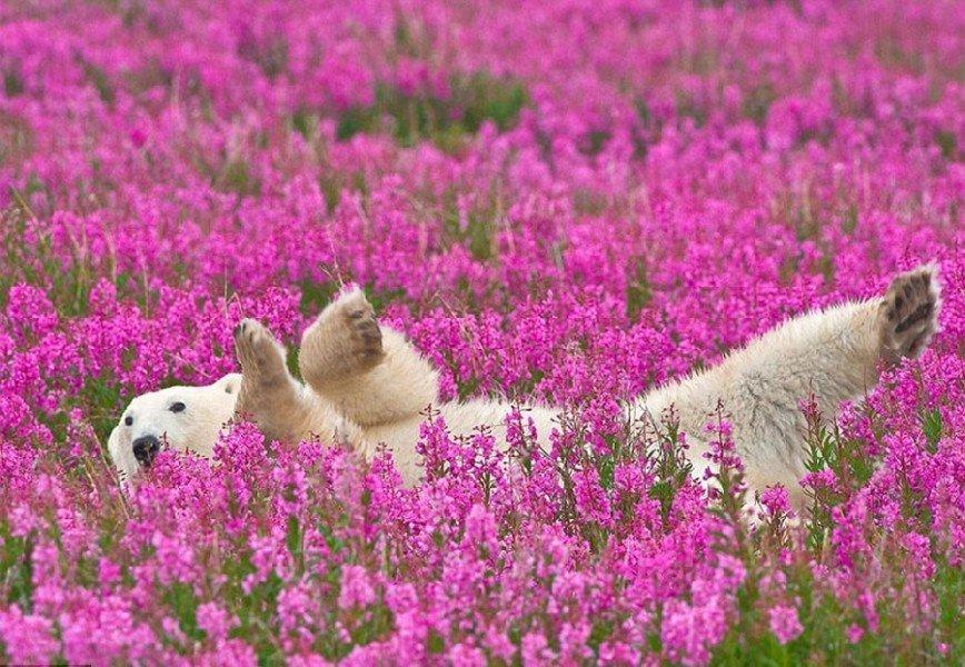Белые медведи на цветочном поле