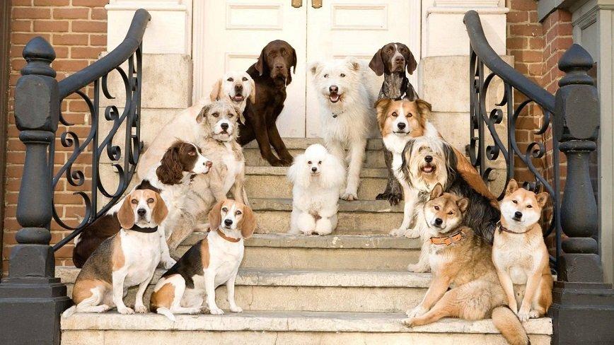 В Берлине собак пустили в музей