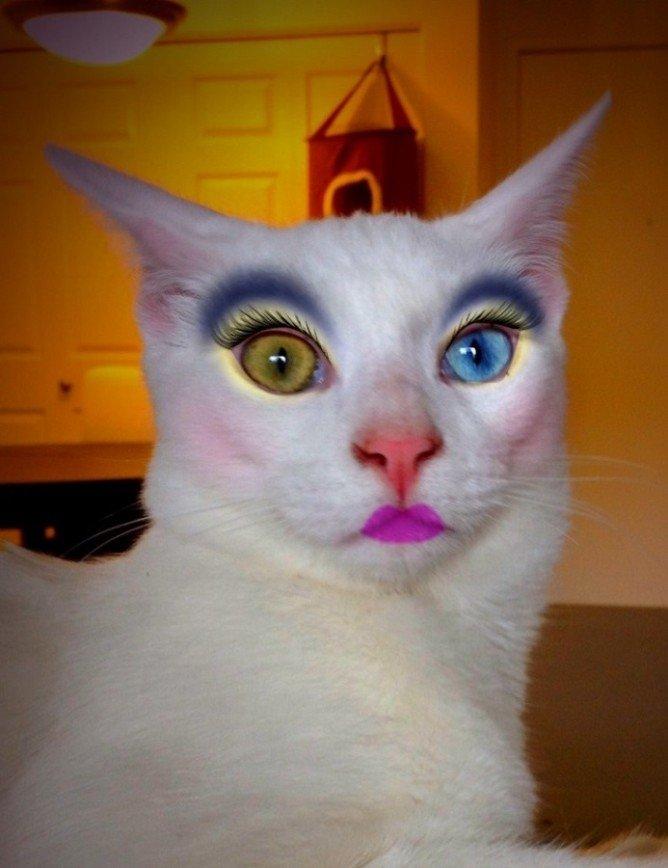 Кошке - тени, собаке - помаду: сумасшедший японский тренд