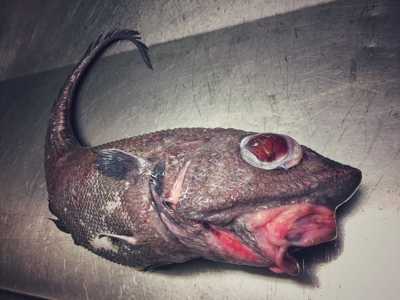 Морские чудовища прославили моряка из Мурманска: