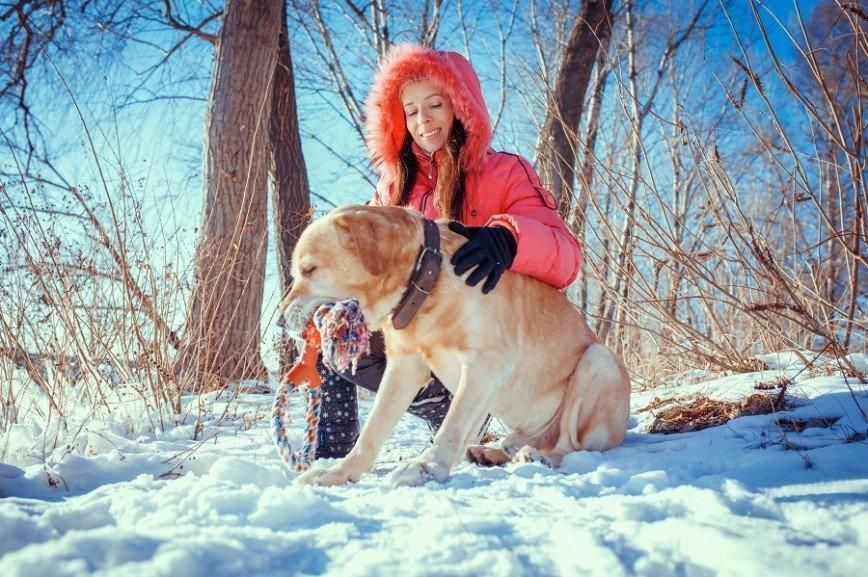 Собаки заменяют спортзал, психолога и лекарства
