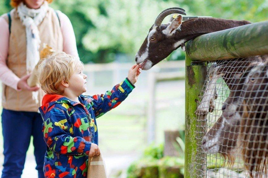 В зоопарке появились автоматы с кормом для животных