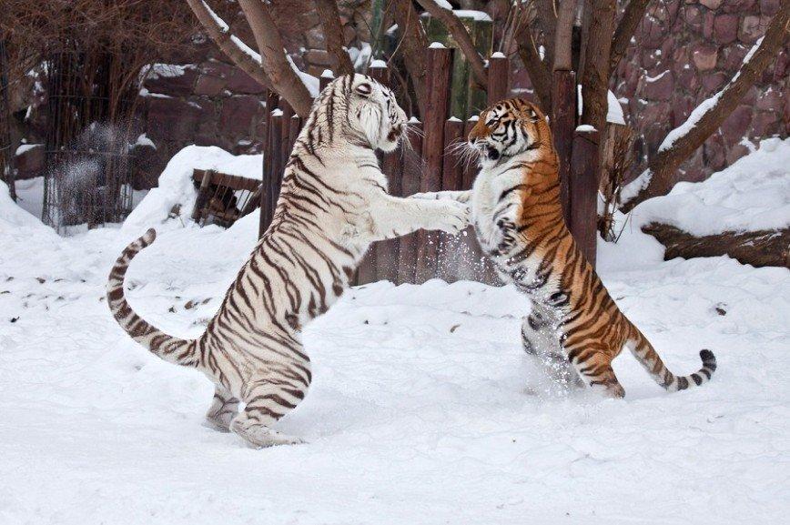 Московский зоопарк празднует 153-й День рождения