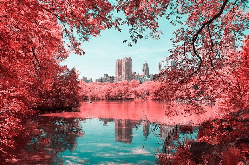 Центральный парк Нью-Йорка в инфракрасных фото