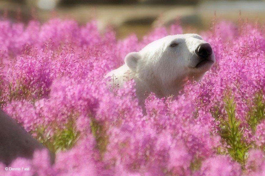 Секс на цветочном поле