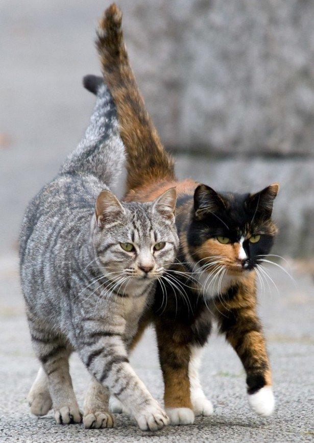 Россияне - самые большие любители кошек в мире