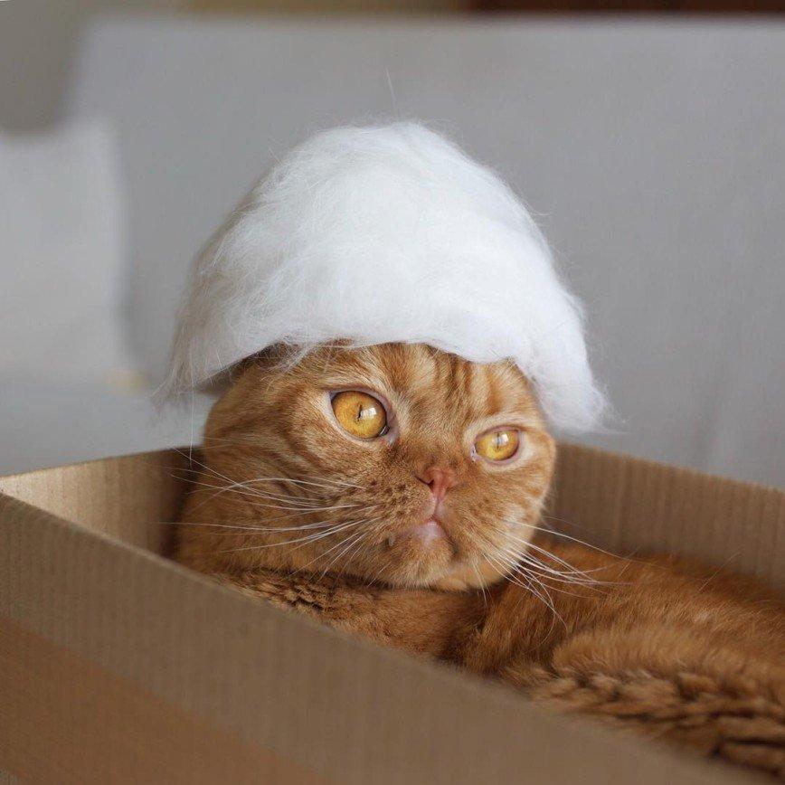 Шляпки для шотландских кошек:
