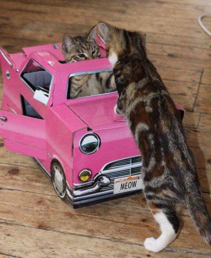 Кошкам нравятся автомобили и самолеты