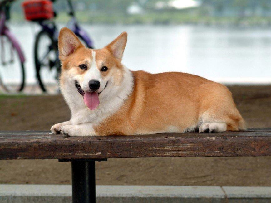 Собаки умеют обмениваться эмоциями