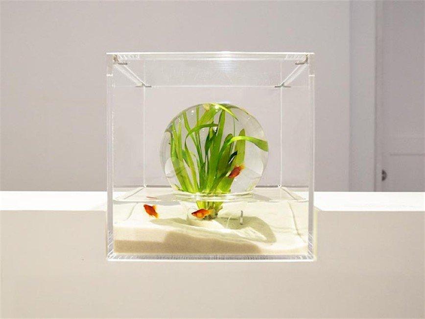 Waterscapes - новый взгляд на аквариумы: Напечатанные на 3D-принтере детали аквариумов имитируют кораллы и другие естественные подводные объекты, которые водные обитатели используют как укрытие, и прекрасно
