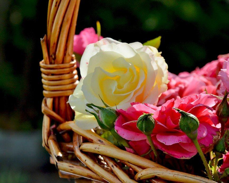 Автор: Bеggy, Фотозал: Макро, Осенние розы
