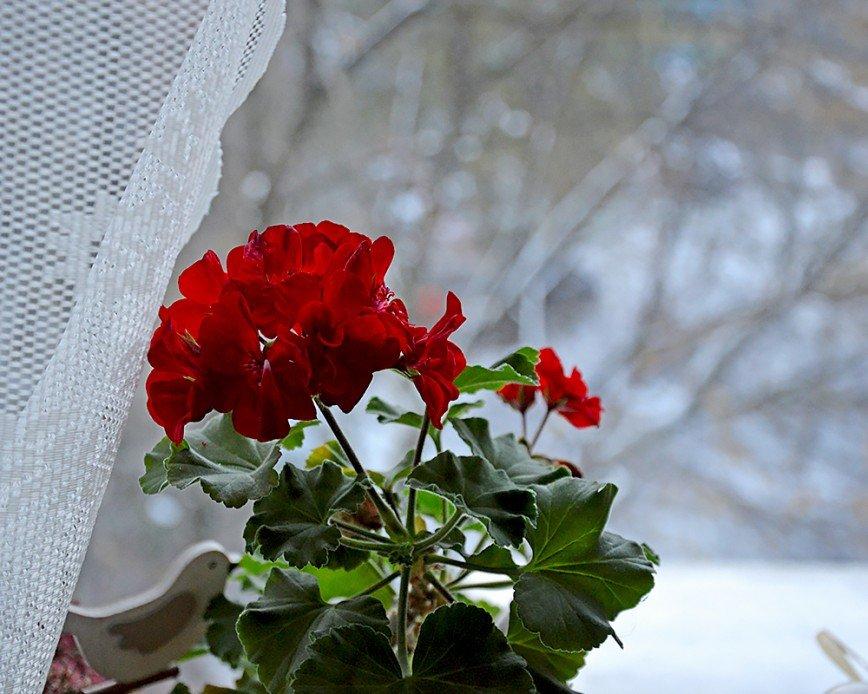 Автор: Bеggy, Фотозал: Мое хобби, Первый снег!!!