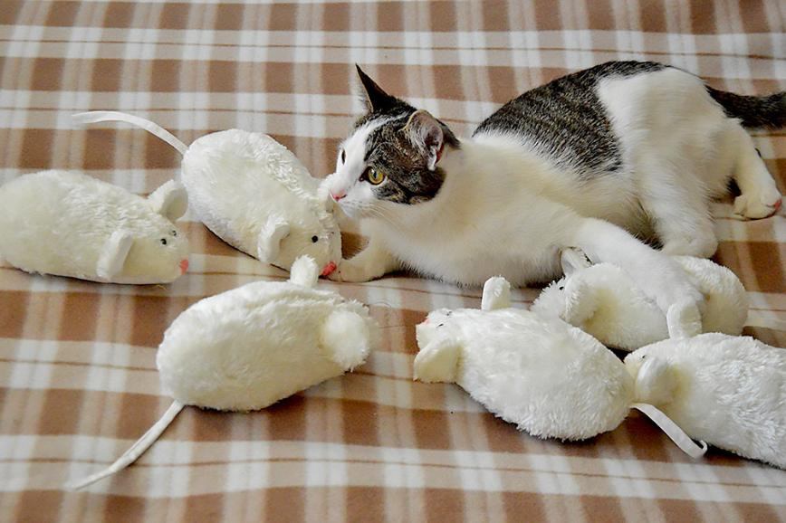 Автор: Bеggy, Фотозал: Мое хобби, Мышки - символ 2020 года