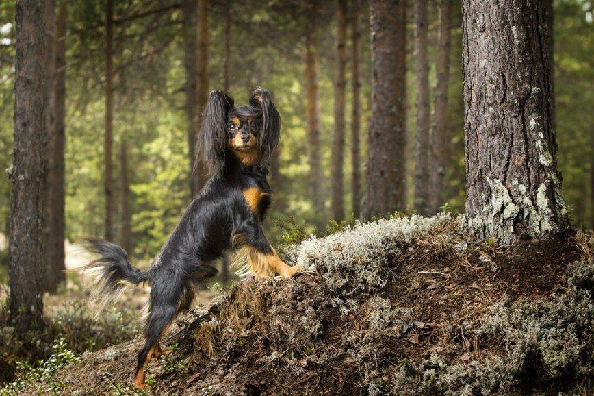 Кто диктует моду на собак, куда исчезли колли и как выбрать домашнего питомца – рассказывает президент Российской кинологической федерации