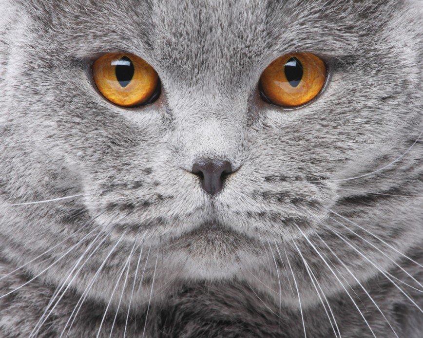 """""""Открой мне!"""": говорящий кот Яков парализовал сеть"""