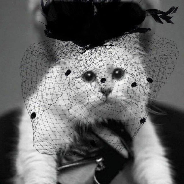"""""""В будущее без папочки"""": кошка Карла Лагерфельда Шупетт поблагодарила за соболезнования"""