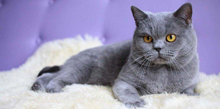 У кошки не 9 жизней: как бесплатно проверить здоровье питомцев у профессиональных ветеринаров
