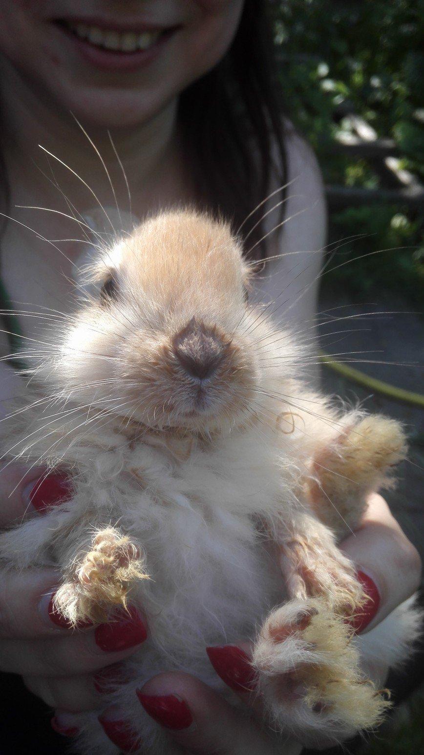 Наши кролики. Своих не режу, ибо у меня с ними отншения))) Но из приобретенной получается потрясающая крольчатина на вертеле.