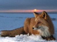 Мое фото FoxY