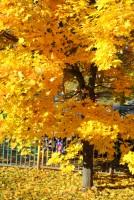 Мое фото Золотaя осень