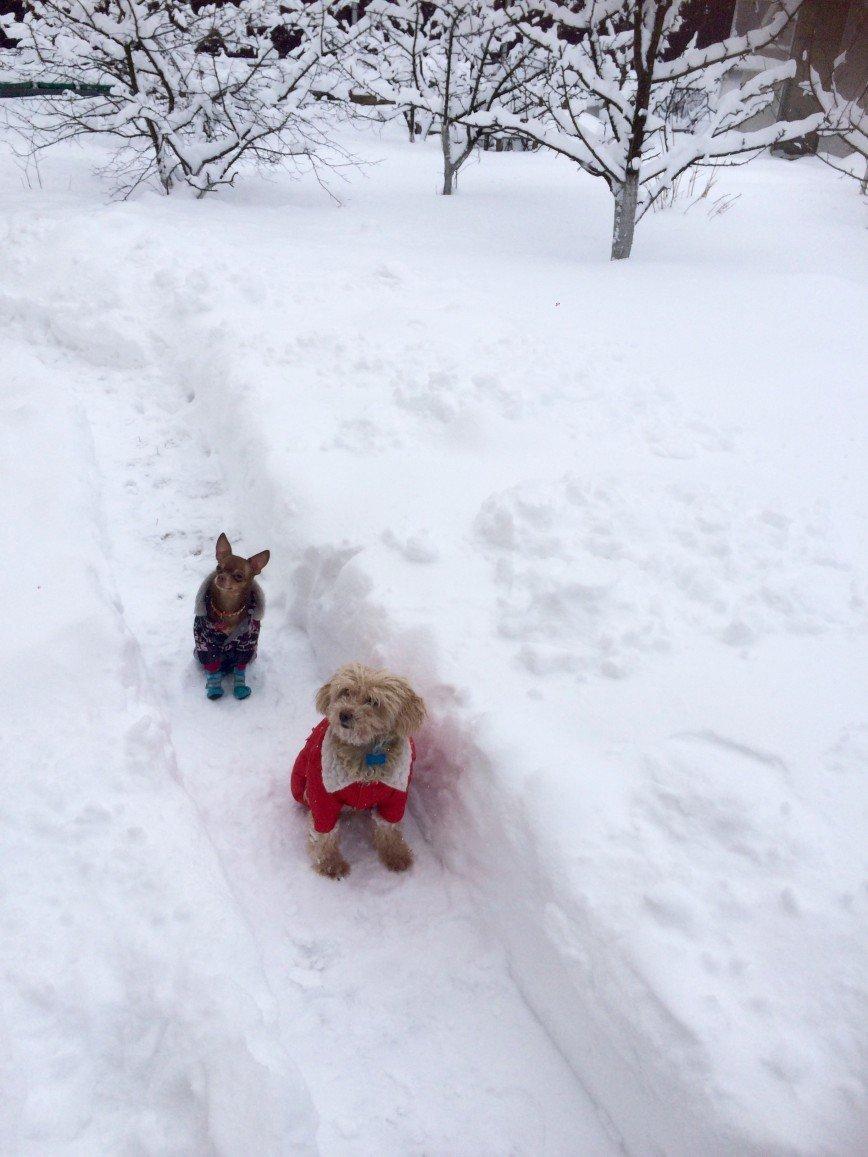 Автор: она идет по жизни смеясь, Фотозал: Домашние питомцы, Снежная зима , ради них дорожки делаем