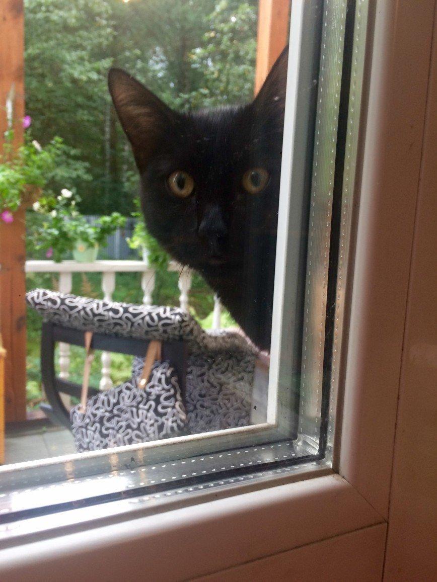 Автор: она идет по жизни смеясь, Фотозал: Домашние питомцы, Вот так Ждун сидел за окном 2 месяца и ждал  , когда же мы его наконец возьмём домой ...