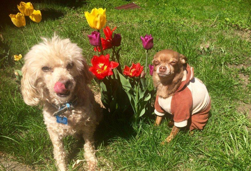 Автор: она идет по жизни смеясь, Фотозал: Домашние питомцы, Весна !