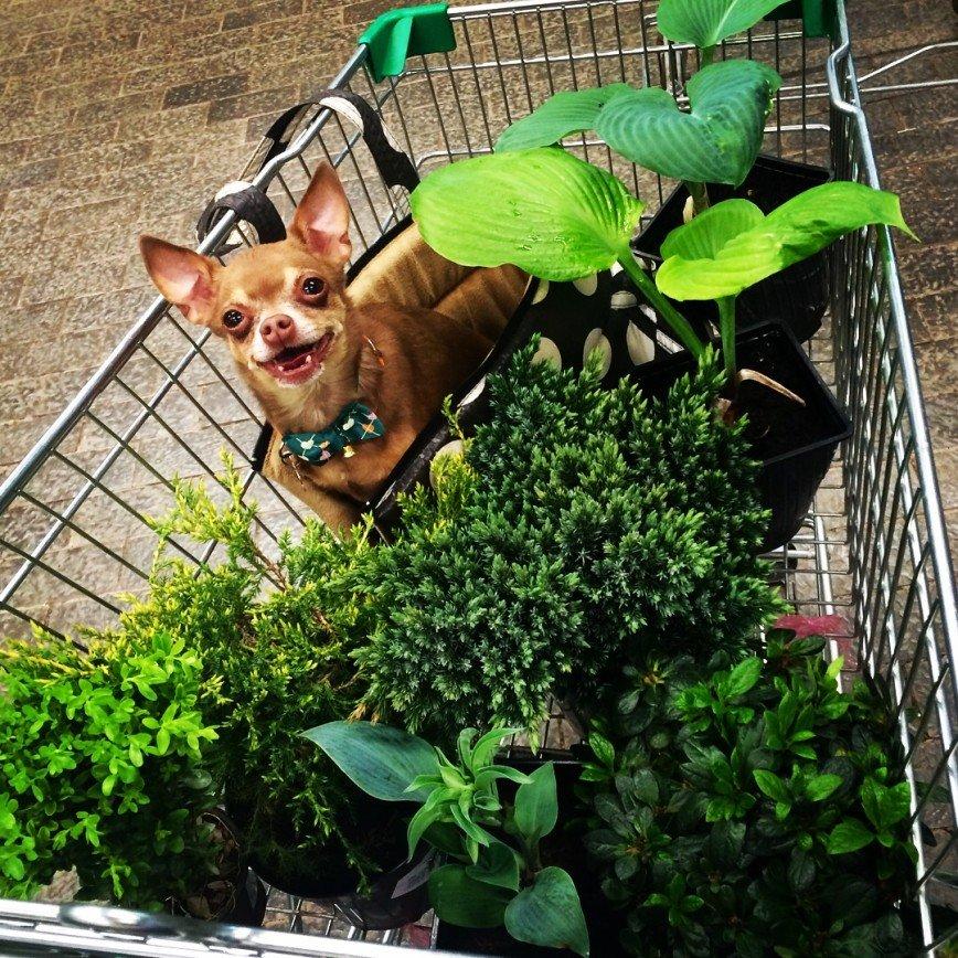 Автор: она идет по жизни смеясь, Фотозал: Домашние питомцы, Собака-улыбака