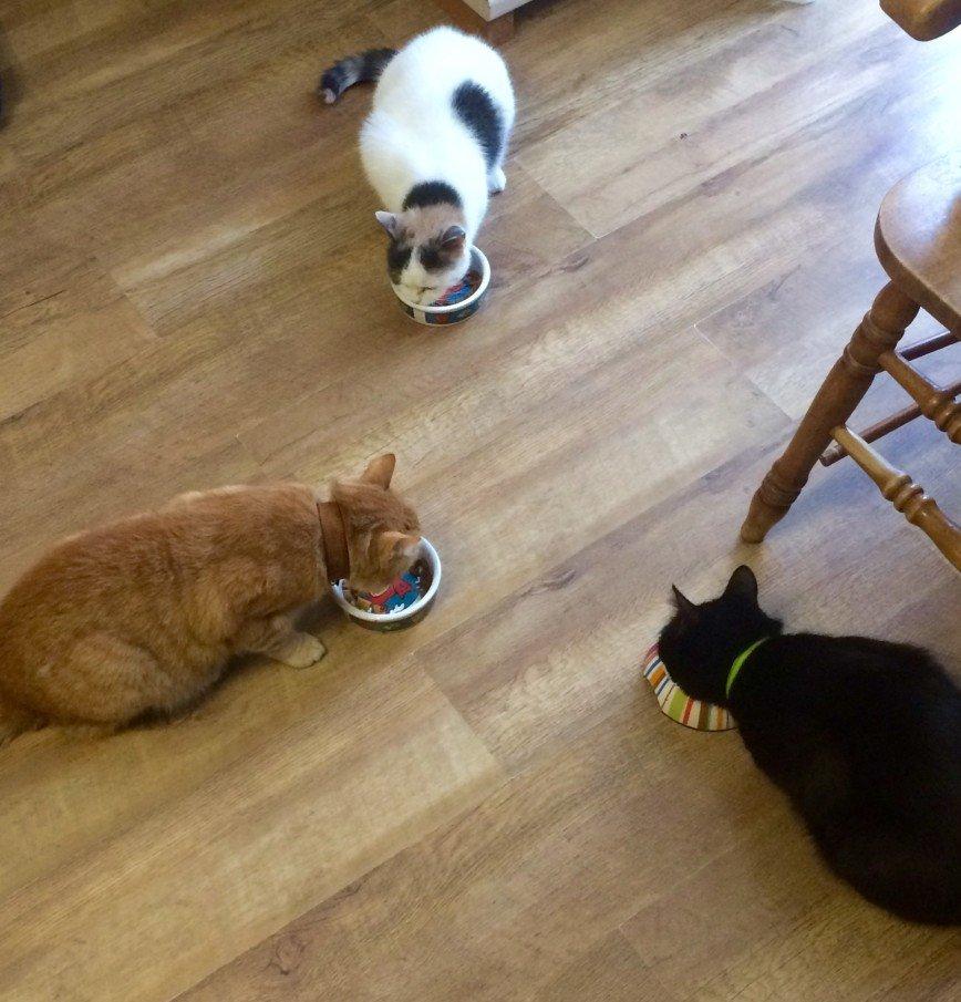 Автор: она идет по жизни смеясь, Фотозал: Домашние питомцы, Наши любимые котики