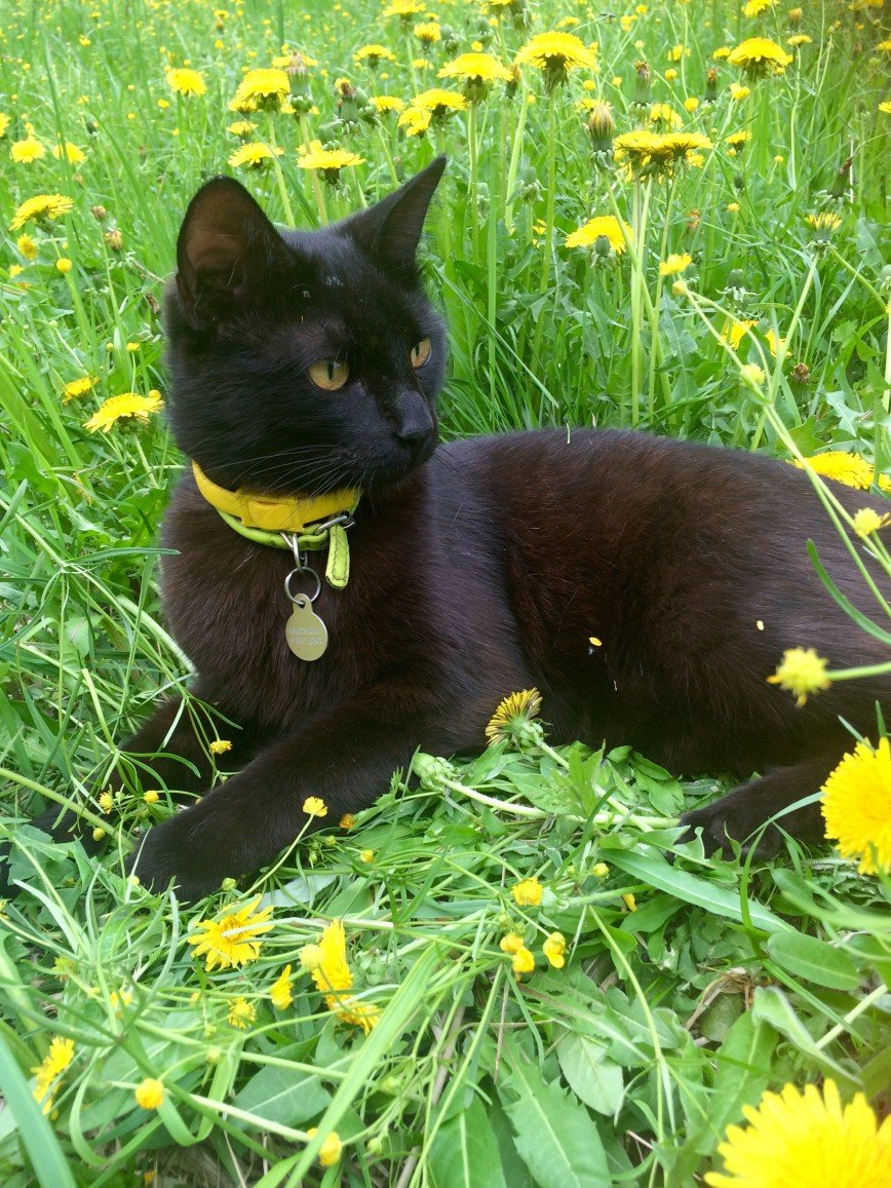 Автор: она идет по жизни смеясь, Фотозал: Домашние питомцы, Наш Ждун. Самый добрый кот в мире :)
