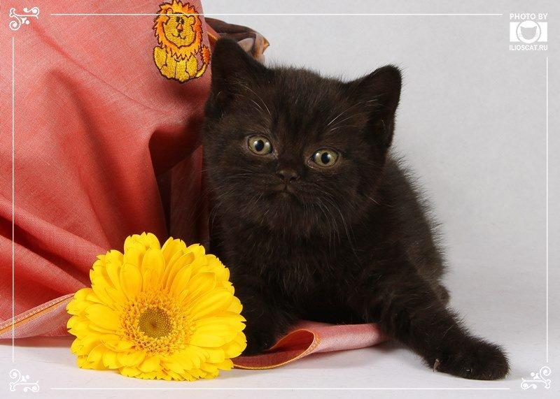 Автор: Ilioscats, Фотозал: Моя семья,