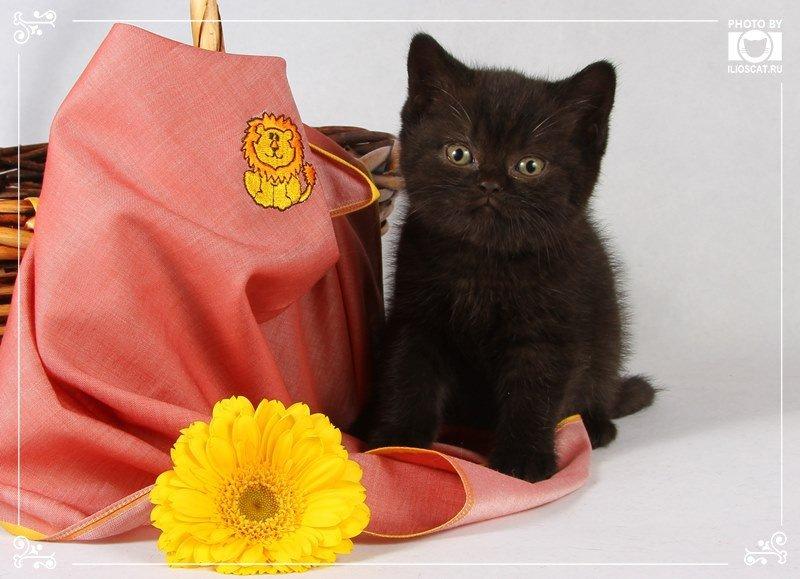 Автор: Ilioscats, Фотозал: Домашние питомцы,
