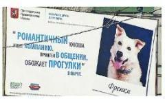 В Москве появились плакаты с фотографиями собак