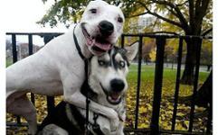 Собаки дуракаваляки