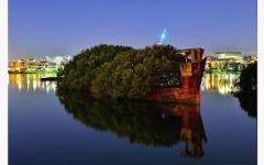 Плавающий мангровый лес