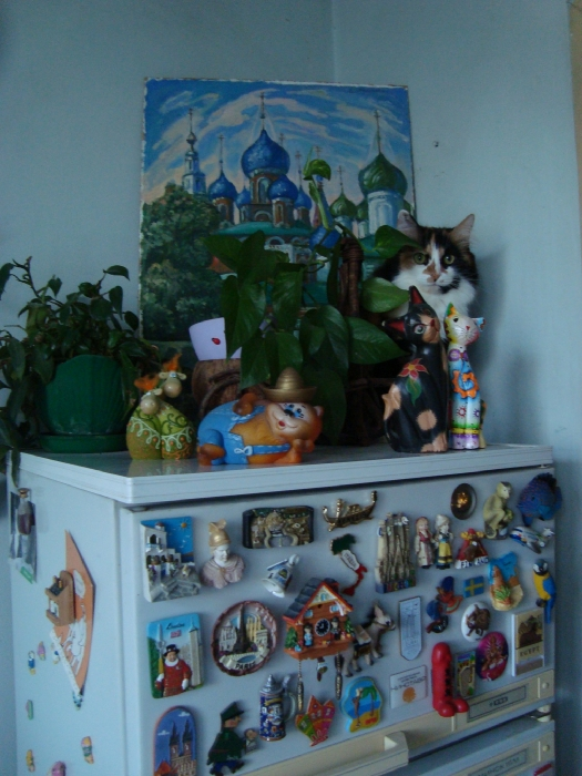 найди кошку)