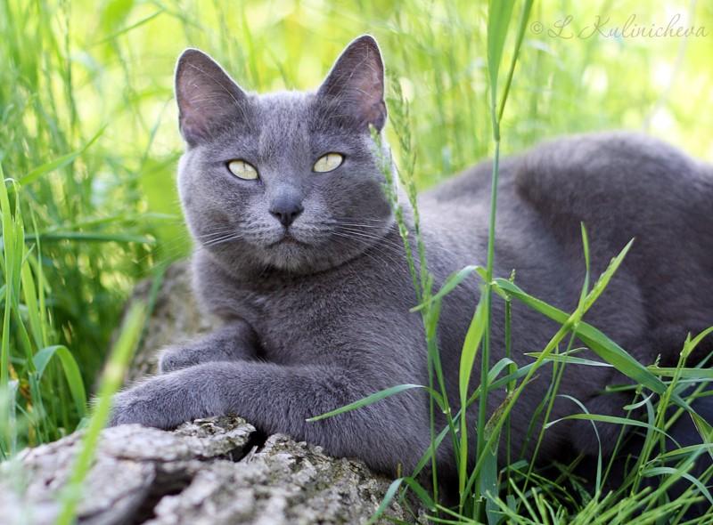 """Не успела выставить фото на первый конкурс серии """"Коротко обо всем. Кошки"""". Поэтому в фотозалах покажу нашу домашнюю любимицу."""