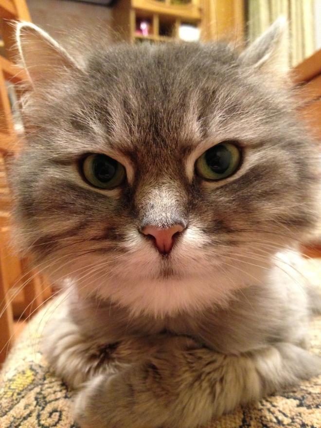 Новая Кошка. Мафия. Она же Маффи. Она же Террористка. Она же Гремлин. Она же ОПЯТЬТЫЧТО-ТОНЕТОДЕЛАЕШЬ!
