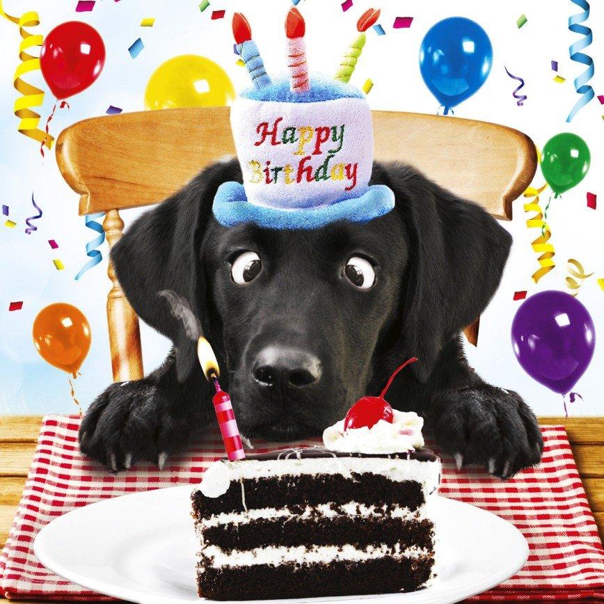 Поздравление с днем рождения собаке стих характеристика