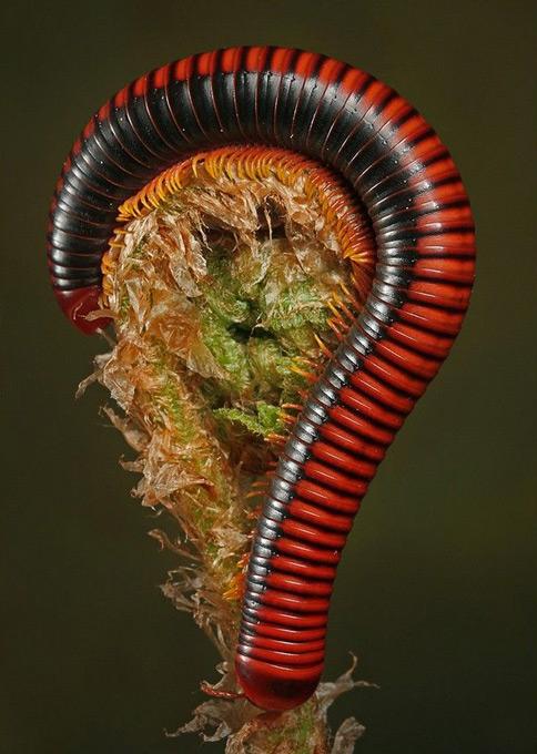 Польский фотограф заглянул в глаза гусеницам и богомолам
