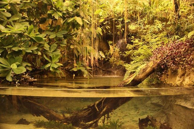 А это тропики. Влажность здесь очень высокая, в центре всей экспозиции постоянно льет тропический дождь. Долго здесь находиться невозможно - душно, техника запотевает. Но это, пожалуй, один из лучших залов Аквариума.
