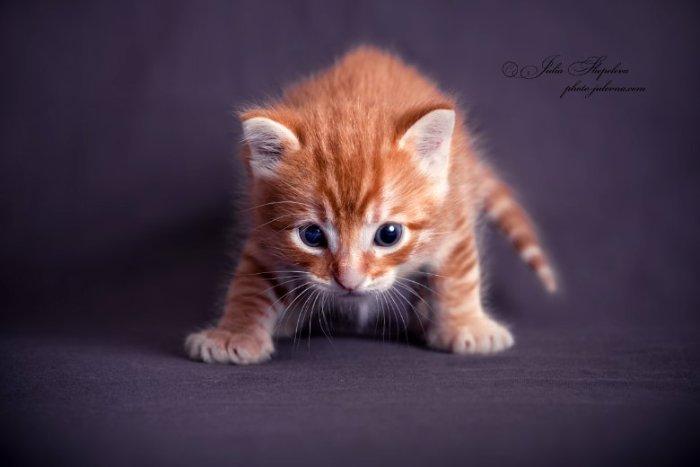 Отдам котика. Рожден 5 апреля, озорник-умница.