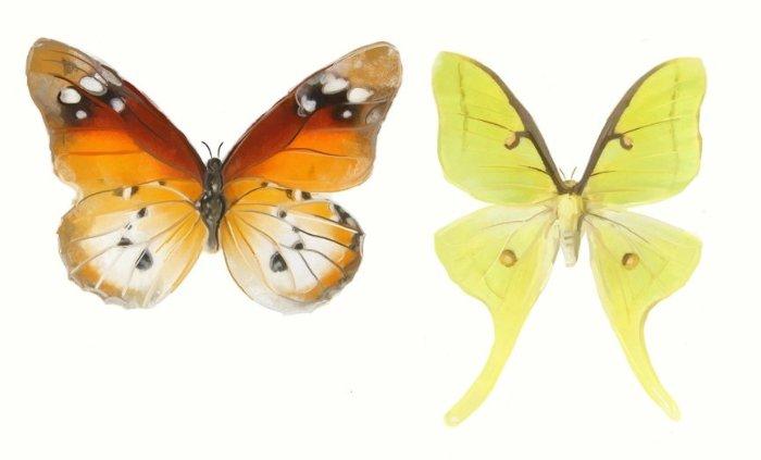 Бабочки. Нарисованы в ArtRage мной.